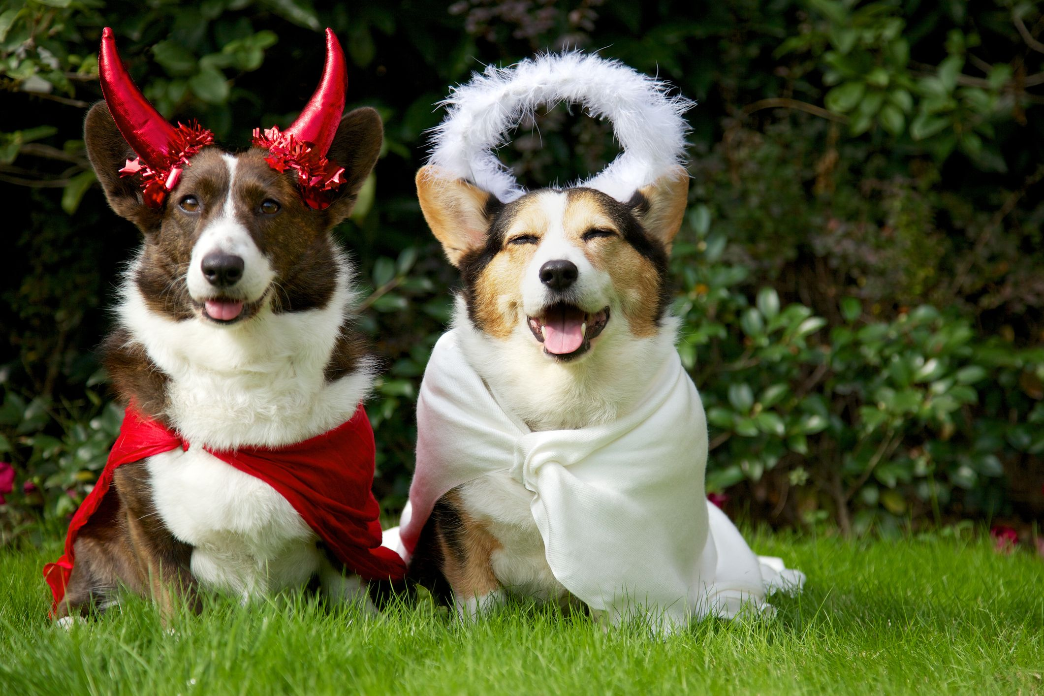 14 Funny Dog Halloween Costumes in 2019 , Best Pet Costume Ideas