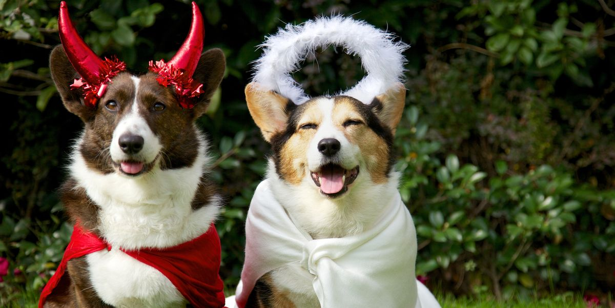 Halloween dog costume ideas: 32 easy, cute costumes for ... |Pet Halloween Coustumes
