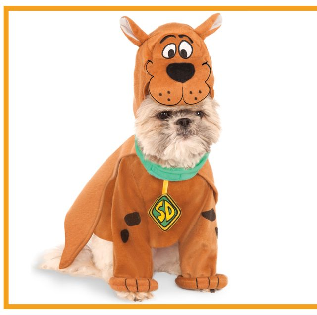 1a471c887 35 Funny Dog and Puppy Costumes for 2019 - Cute Pet Halloween ...