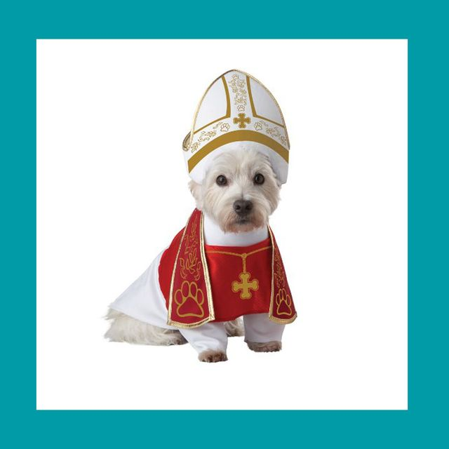 2893e1ae1b6 40 Dog Halloween Costumes - Cute Ideas for Pet Costumes