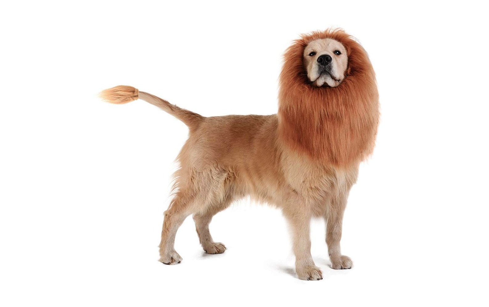 Amazon Customers Are Raving About This $14 Lion Mane that Turns Dogs into Simba