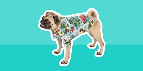 dog Hawaiian shirt