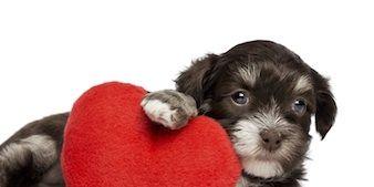dog-heart-disease-risk.jpg