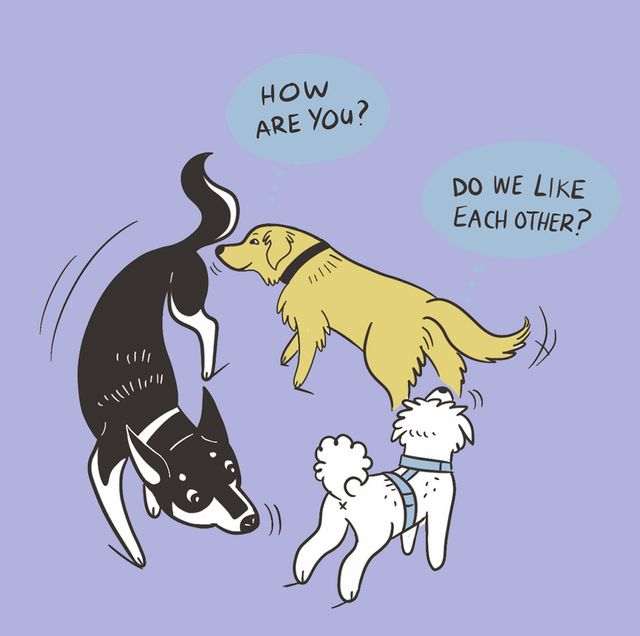 lili chin dog behaviour illustrations