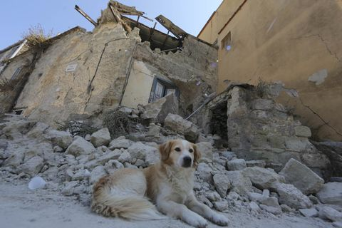 a dog in front of the ruins of his home in ischia in the