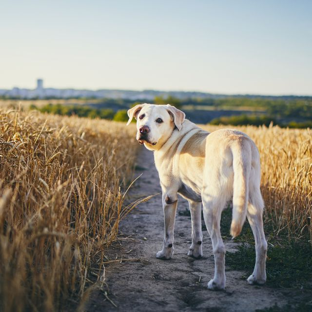 dogs bought in lockdown haven't learnt this essential countryside walking rule