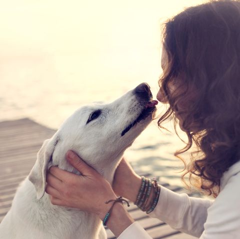 Dog kissing their owners