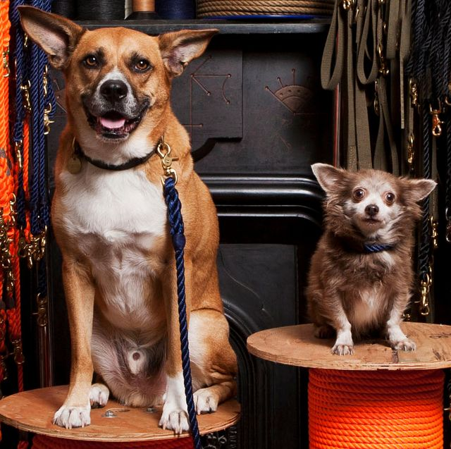 2 dogs with backdrop of rope leashes