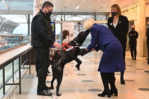 みんな犬派? 写真で振り返るイギリス王室メンバーとワンちゃん