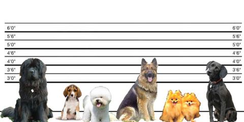 Doggie Lineup