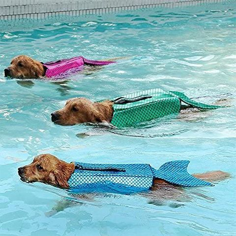 Canidae, Dog, Swimming pool, Fun, Carnivore, Recreation, Leisure, Dog breed, Sporting Group, Swimming,