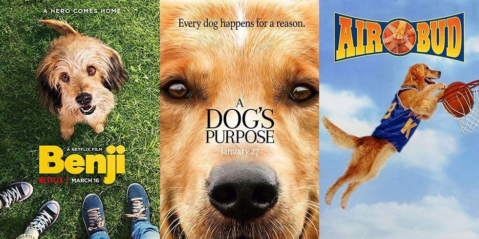 20 Best Dog Movies Top Pet Movies Of All Time