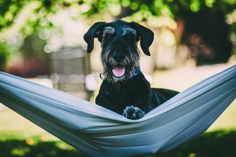 Dog in a hammock photo
