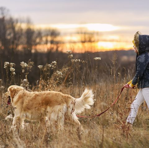 Dog on walk with owner