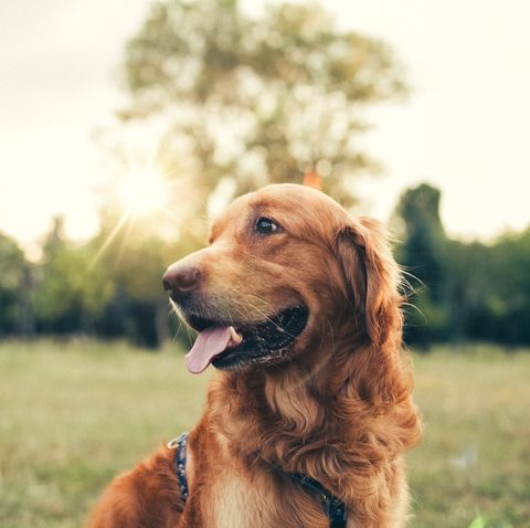 5 ways to prevent skin cancer in your dogs this summer
