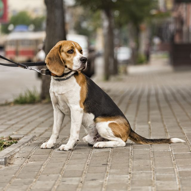 owners warned not to leave dogs tied up outside shops amid rise in thefts