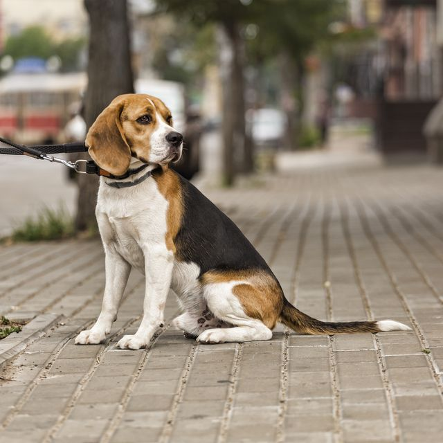 dog, outside, shop, animal, city, one, owner, pet, store,