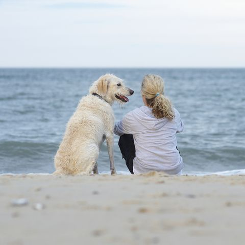 dog owner beach