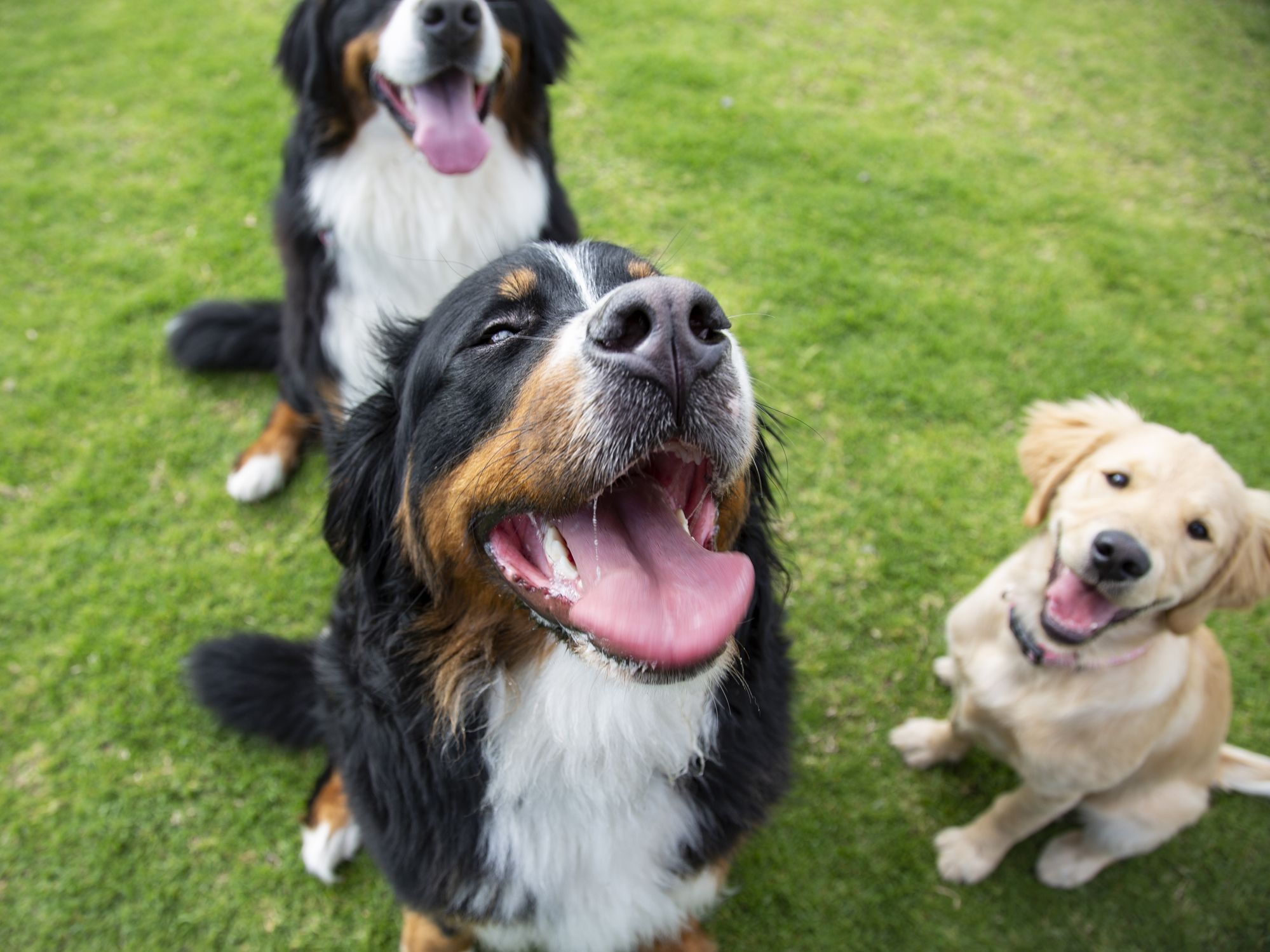 9 pet laws you probably didn't know existed