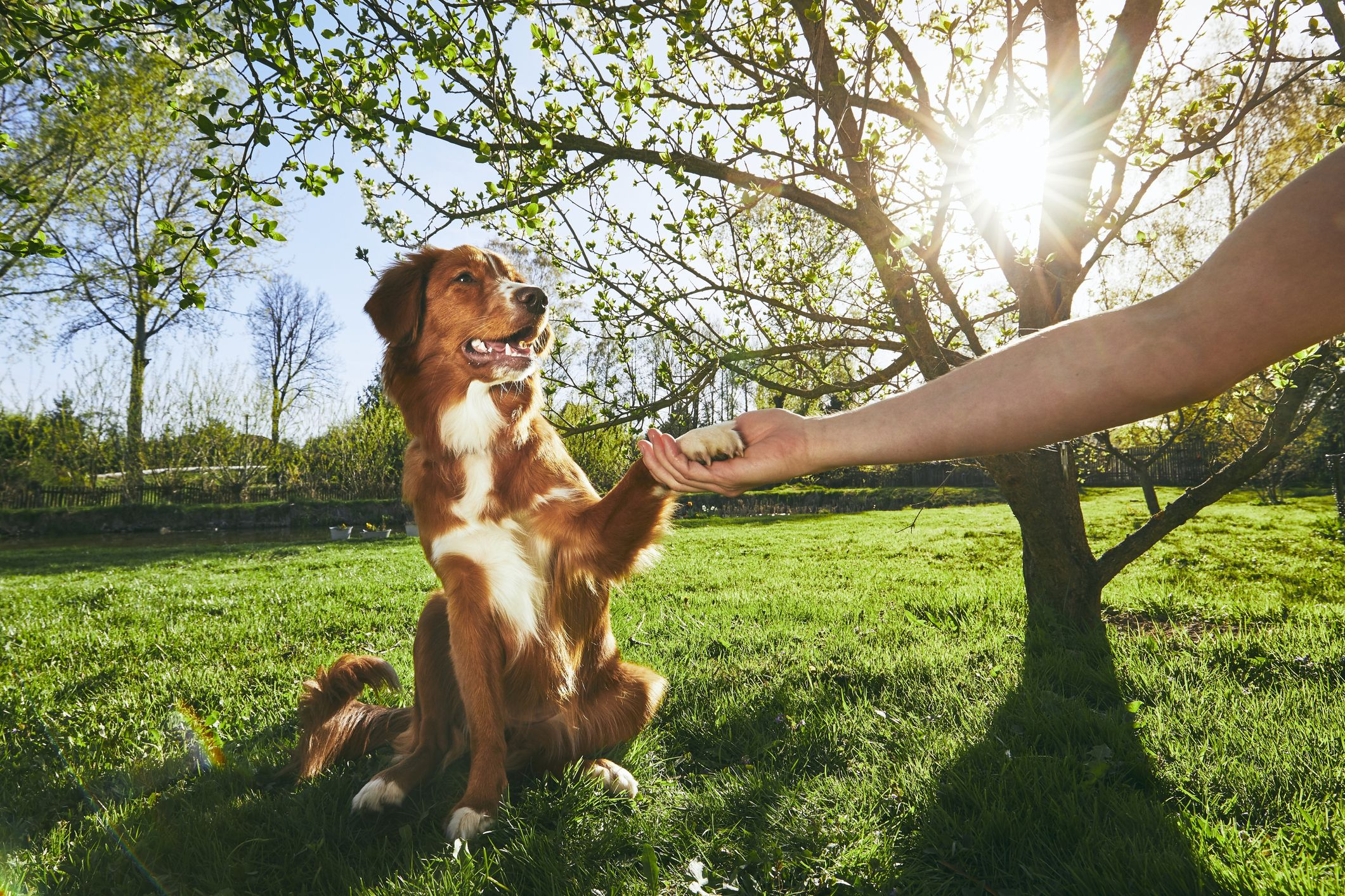 7 truths that could prove you love your dog more than your partner