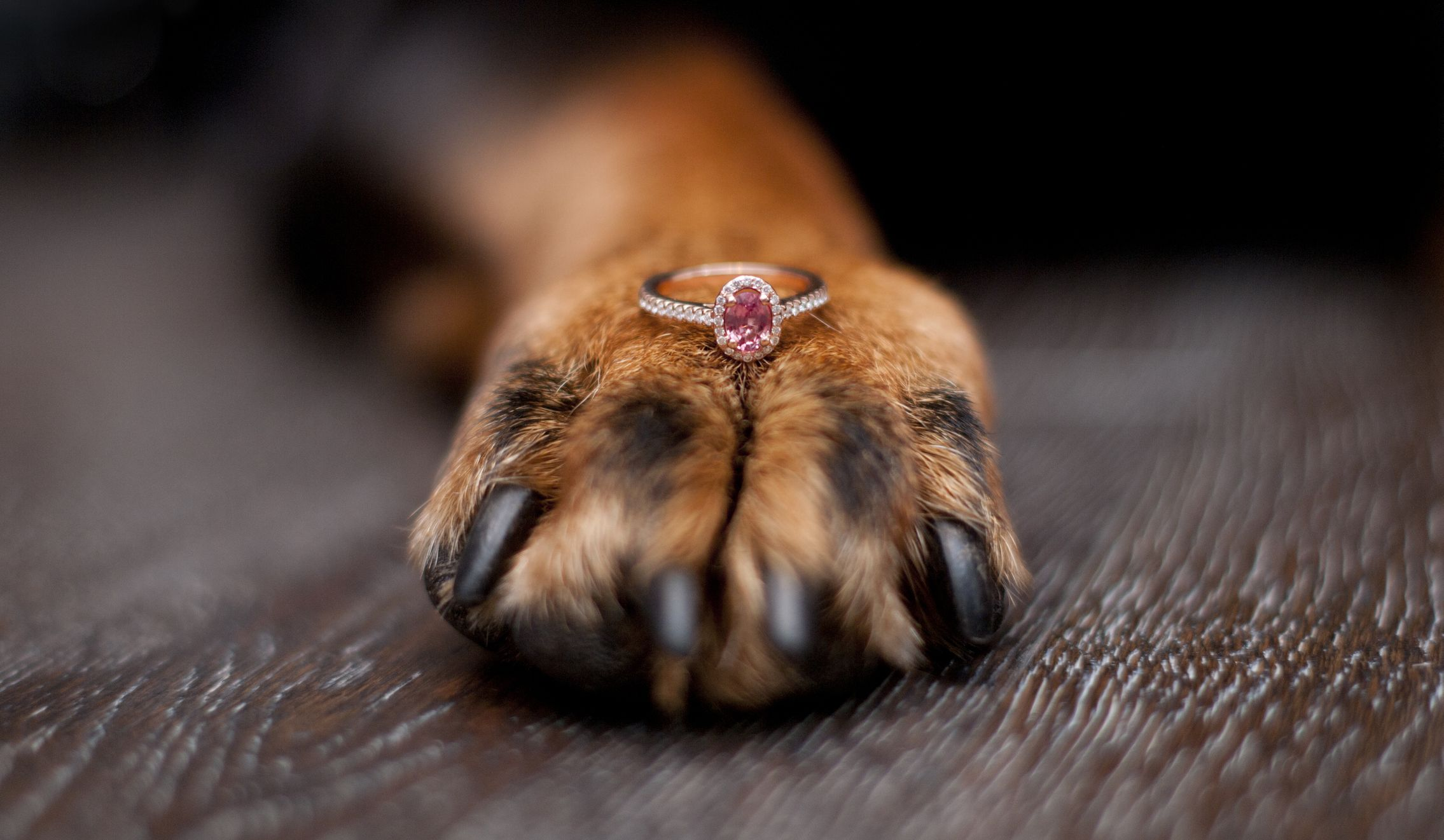 You Can Now Turn Your Pet Into a Diamond After They Pass Away