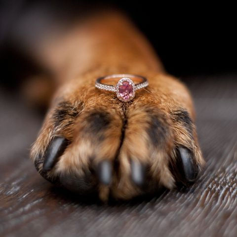 Dog paw with pink sapphire engagement ring