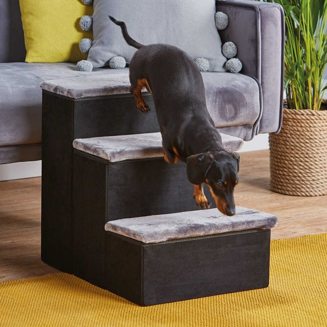 aldi launches new pet collection, including pet stairs