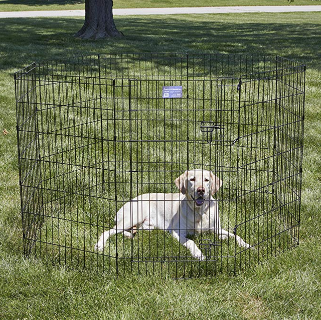 puppy playpen - MidWest wire crate