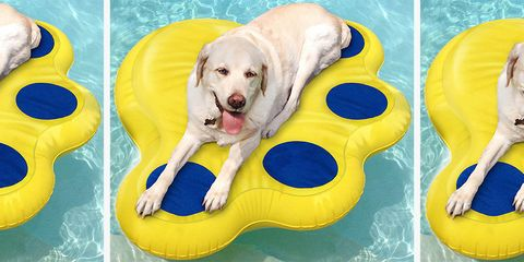 Canidae, Dog, Dog toy, Product, Yellow, Dog breed, Fun, Labrador retriever, Carnivore, Sporting Group,