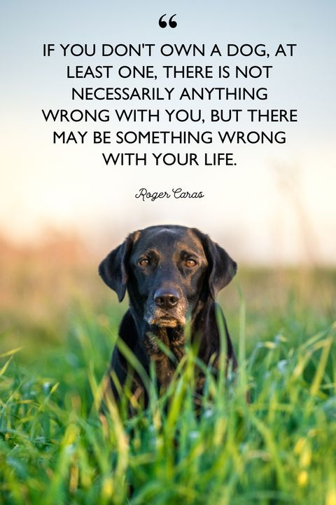 Roger Caras dog quotes