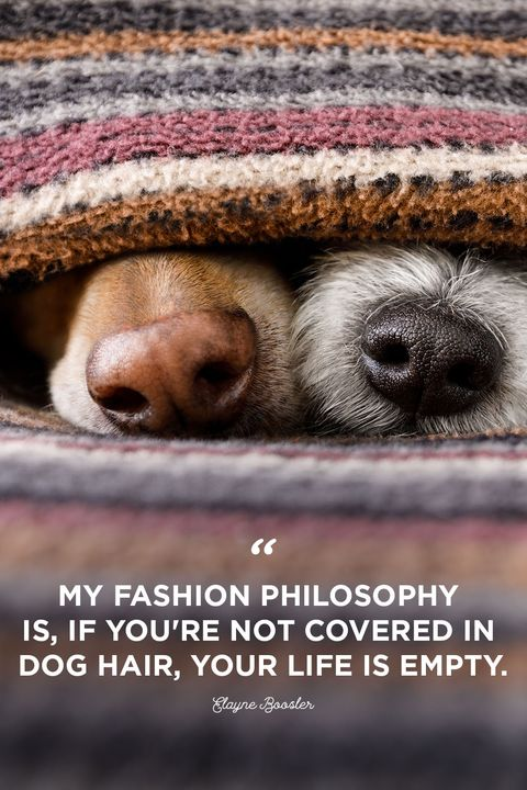 30 Cute Dog Love Quote...