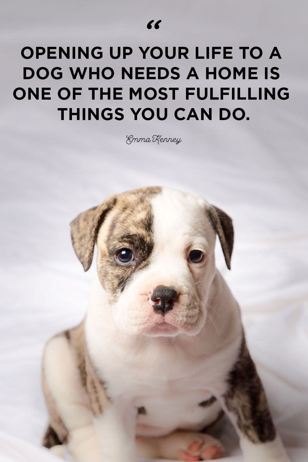 30 Cute Dog Love Quotes - Puppy Sayings and Dog Best Friend ...