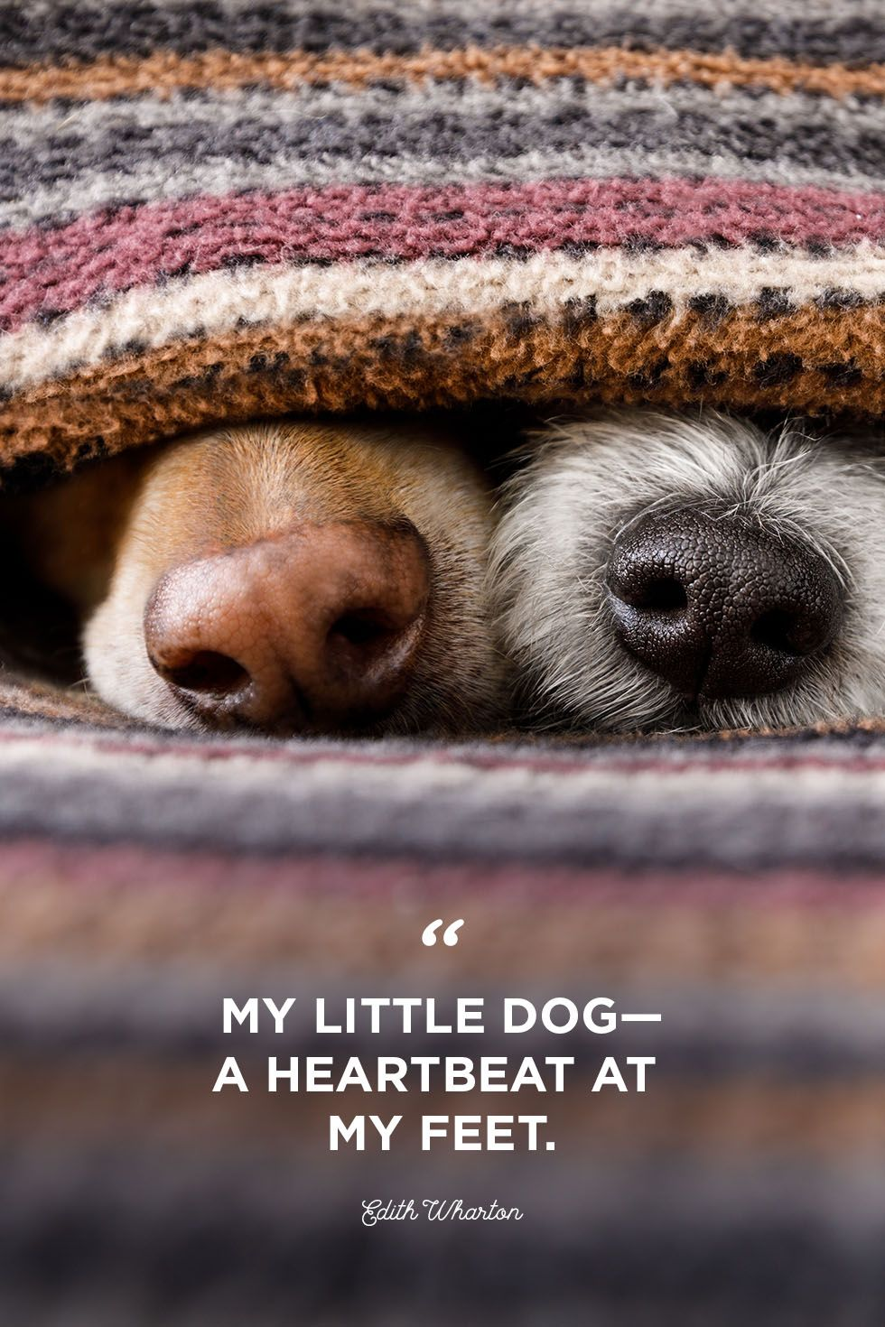 Dog Love Quotes | 30 Cute Dog Love Quotes Puppy Sayings And Dog Best Friend