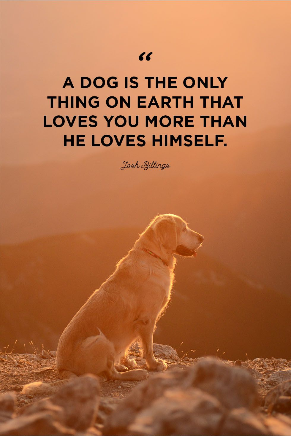 30 Cute Dog Love Quotes - Puppy Sayings and Dog Best Friend Quotes