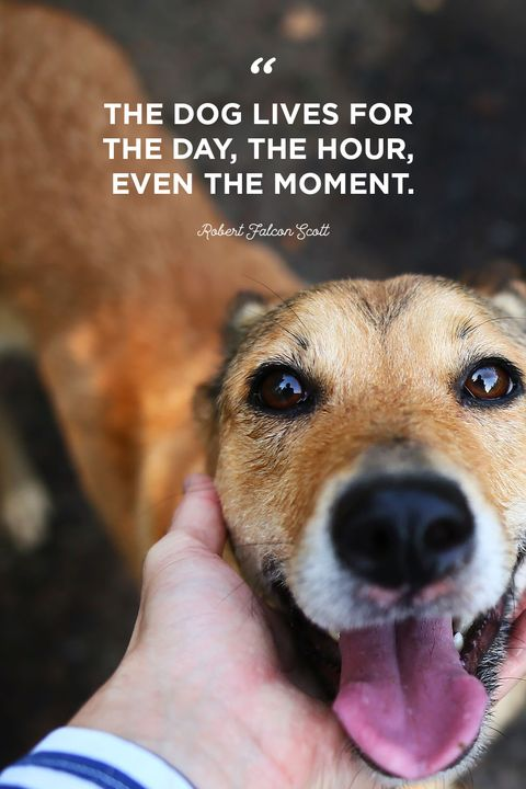 40 Best Dog Quotes - Cute, Sweet Quotes About Dogs