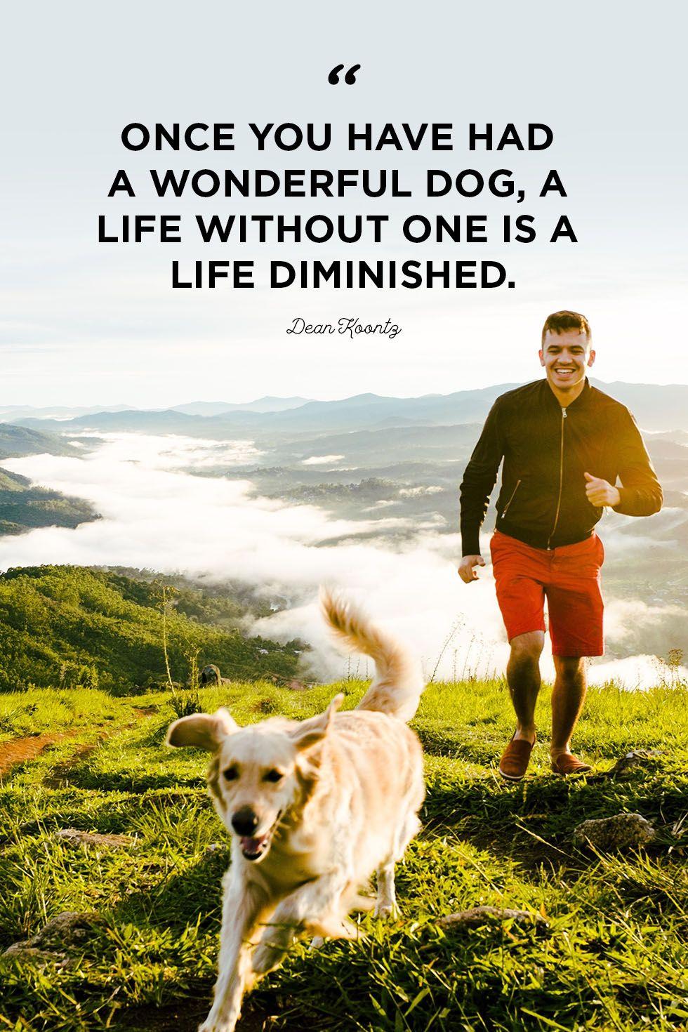 Dog Quotes Wonderful dog