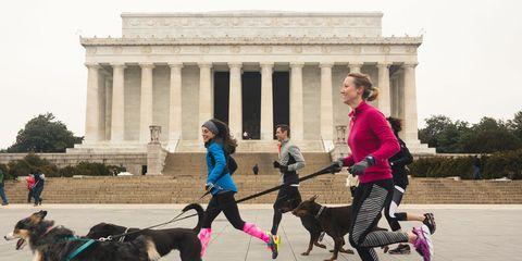 Dog Runners