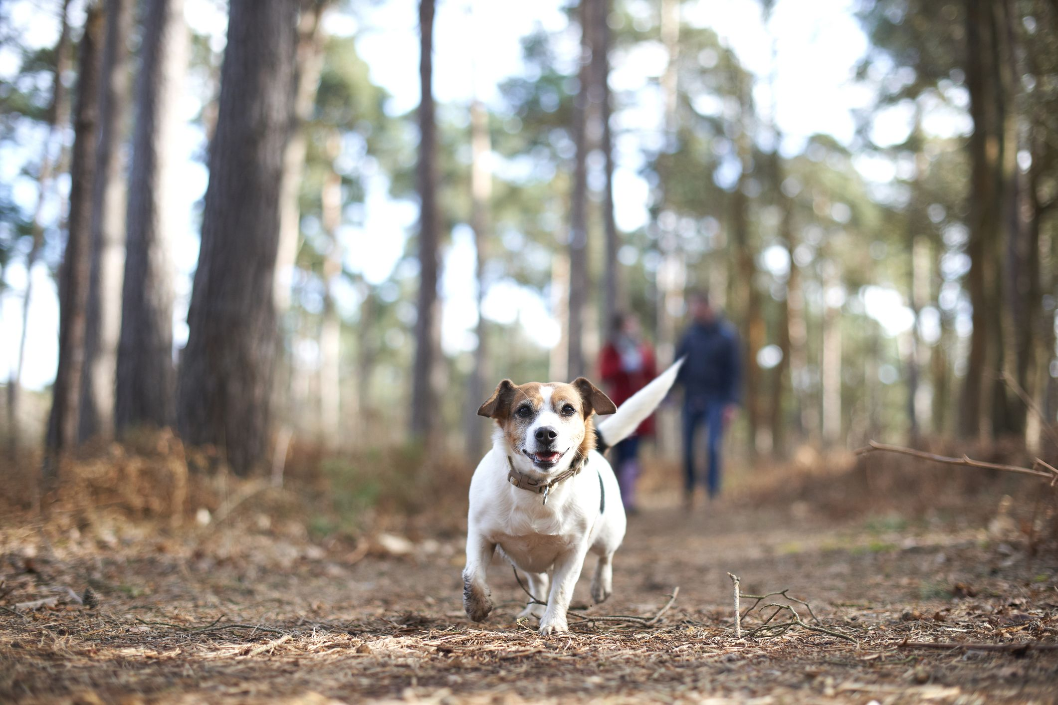 The National Trust promote responsible dog ownership with 5 countryside rules