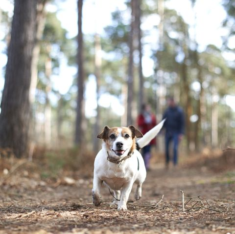 owners can walk their dogs more than once a day, says new government advice