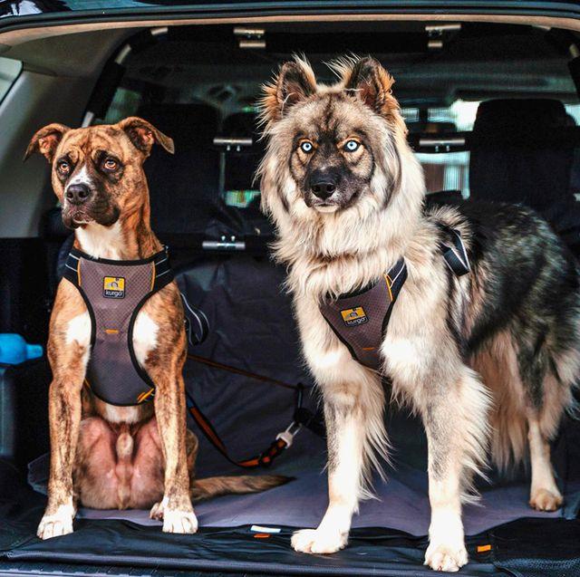 dog seat belts best 2020
