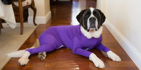 This Dog Onesie Keeps Your Pup from Shedding All Over Your House