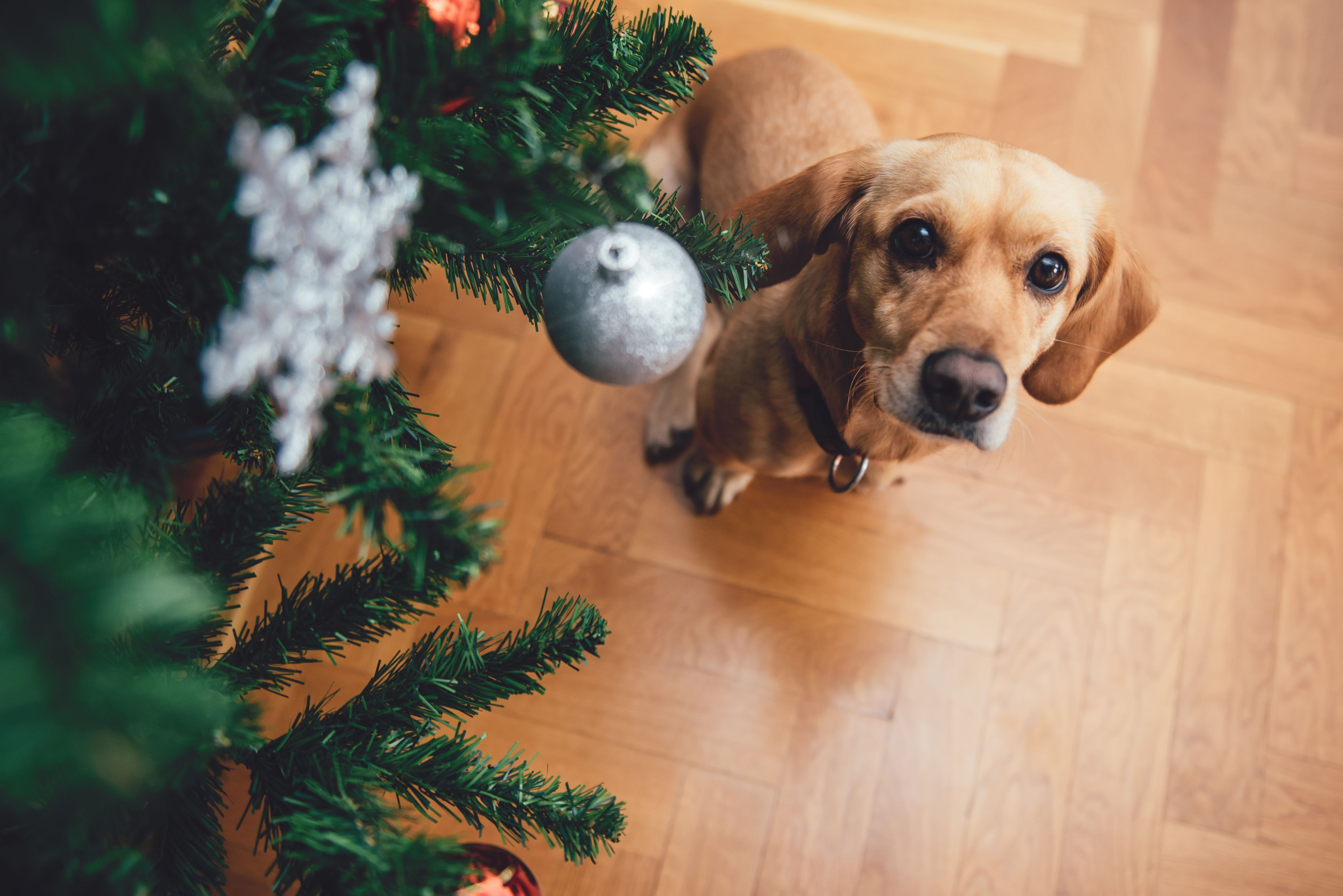 Portal Christmas Trees Are A Massive Hit With Dog Owners