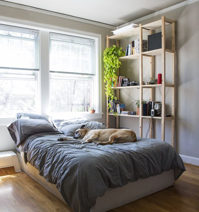 Dog sleeping on bed against windows at home