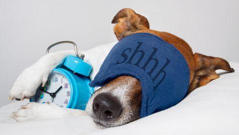 hond slaapt, droomt met alarm