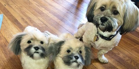 You Can Get Slippers Made to Look Exactly Like Your Dog