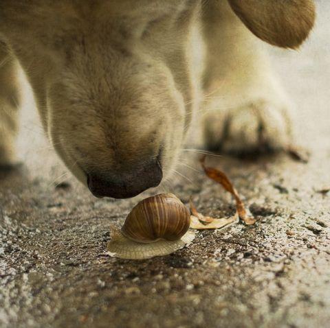 Dog smelling snail outside