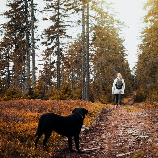 5 best dog walks in the uk for autumn