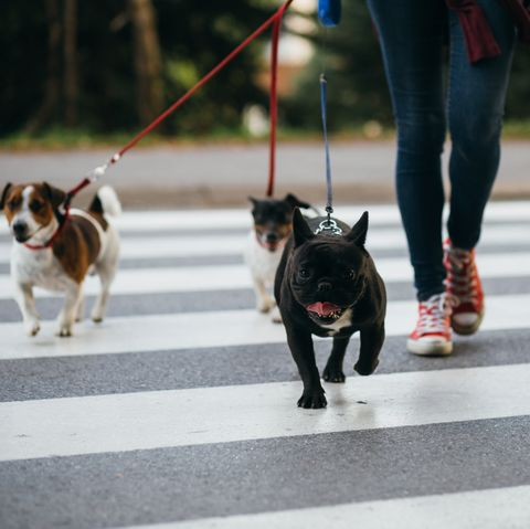 Best Summer Jobs for Teens - Dog walker
