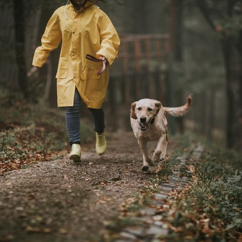 Dog walking outside with owner