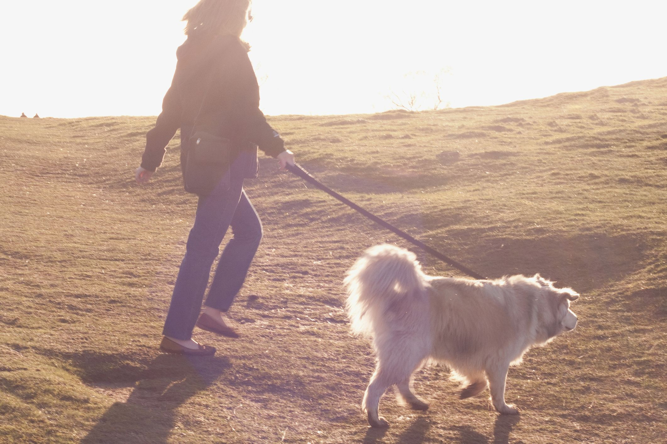Dog owners urged to rethink their walking habits after sad truths emerge in new study
